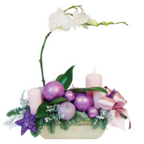Christmas Phalaenopsis composition